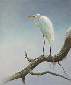 White Egret by Matt Constantine